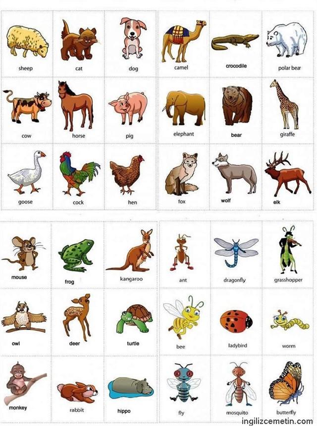 ingilizce hayvanlar